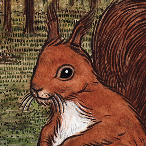 <b>Northumberland Wildlife Trust</b> - Illustrations for The Last Red Squirrel - 1 of 4