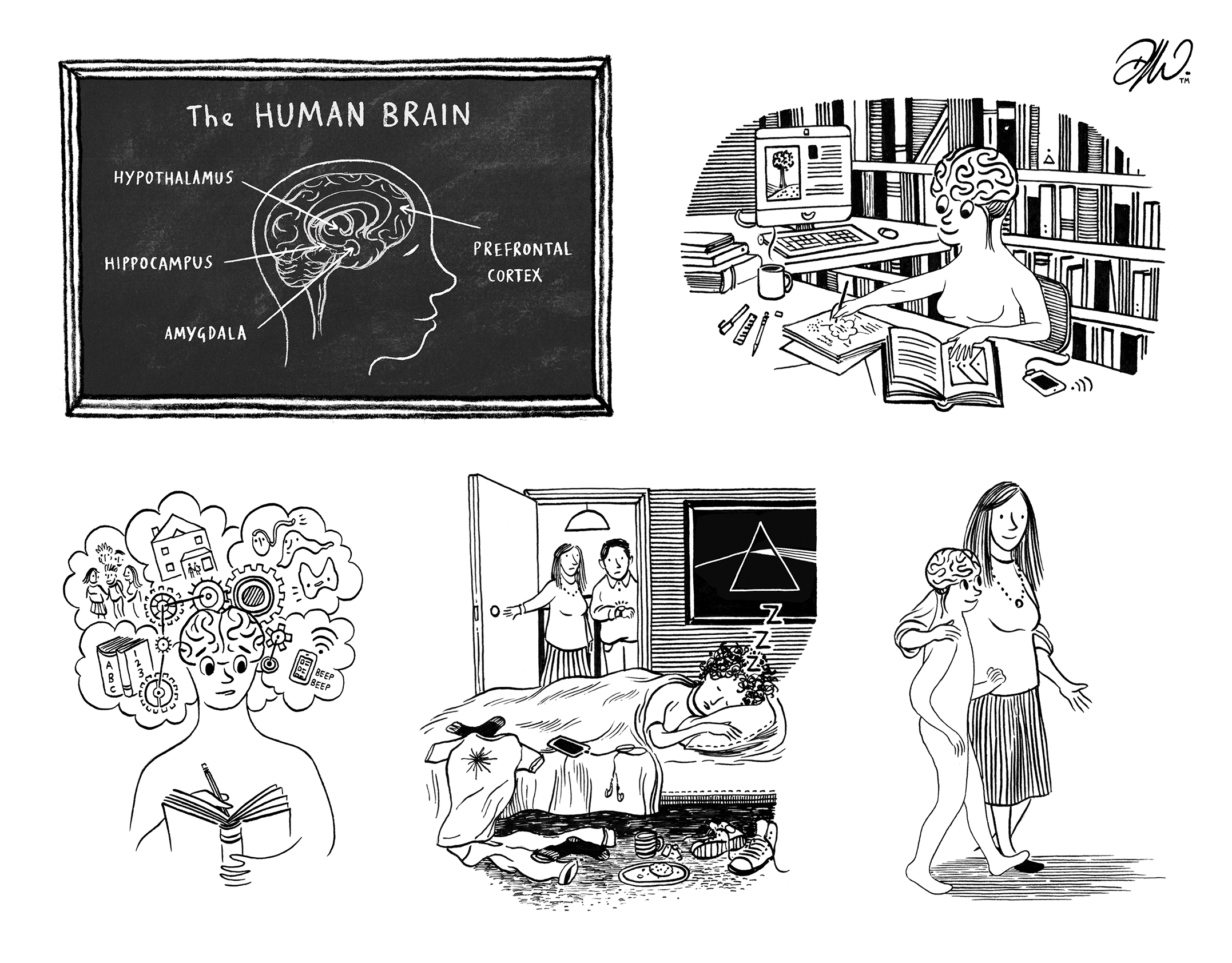 <b>10 Things You Need To Know About The Teenage Brain </b> - Booklet Pen & Ink Illustrations / 2 of 2