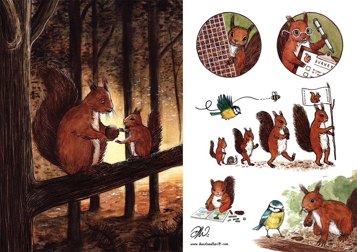 <b>Northumberland Wildlife Trust</b> - Illustrations for The Last Red Squirrel - 3 of 4