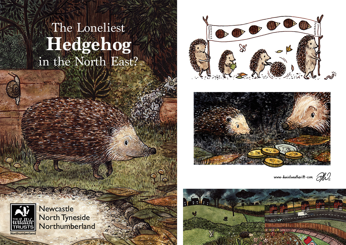 <b>Northumberland Wildlife Trust</b> - Illustrations for The Loneliest Hedgehog - 2 of 2