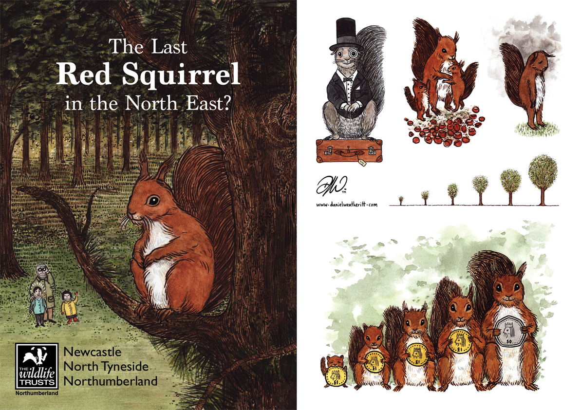 <b>Northumberland Wildlife Trust</b> - Illustrations for The Last Red Squirrel - 2 of 4